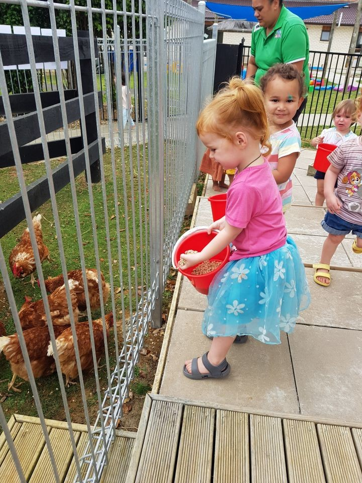 Caring and looking after our Chickens at Kids Count Pukekohe.